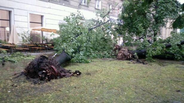 Powalone drzewo warszawa@tvn.pl