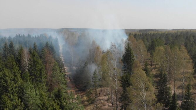 W Australii pożary dotknęły większy obszar, <br />niż zajmują wszystkie lasy w Polsce