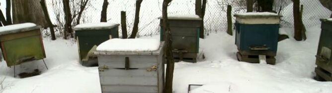 Niekończąca się zima wykańcza pszczoły