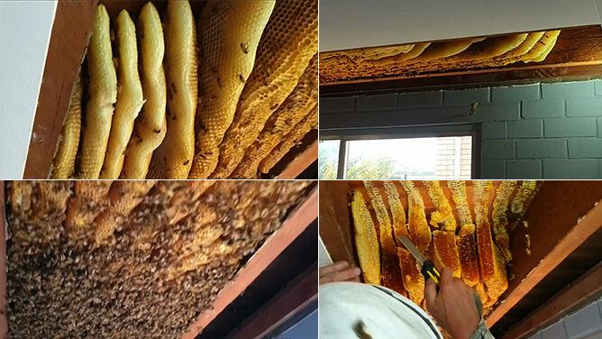 """""""Zadzwoniła i powiedziała: <br />mam pszczoły pod sufitem"""""""