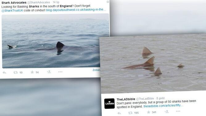 Kilkadziesiąt rekinów pojawiło u wybrzeży Anglii
