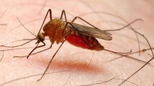 Komary przechytrzyły ludzi. I jak tu walczyć ze śmiertelną malarią?